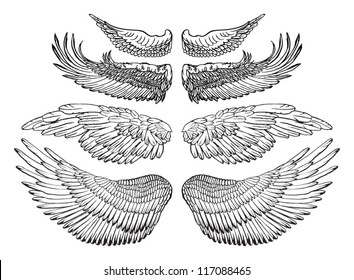 Eagle wings - vector drawing