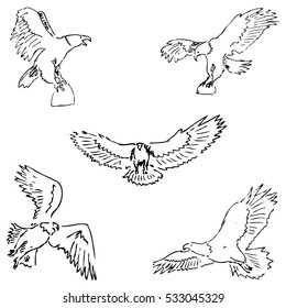 Eagles. Sketch pencil. Drawing by hand. Vector