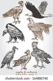 eagles & vultures 1