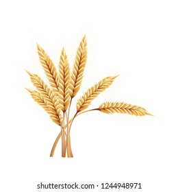 ear of paddy rice barley malt wheat