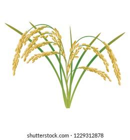 An ear of rice plant