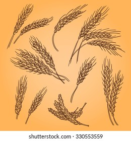 Ears of wheat. Engraving retro illustration. Doodle style