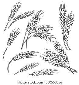 Ears of wheat. Line illustration. Doodle style