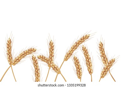 Ears of wheat in vector 3D realistic illustration. Ripe grain clipart for packaging design: bread, beer, kvass, pastries.