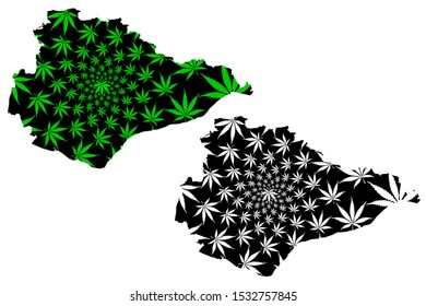 East Sussex (United Kingdom, England, Non-metropolitan county, shire county) map is designed cannabis leaf green and black, East Sussex map made of marijuana (marihuana,THC) foliage