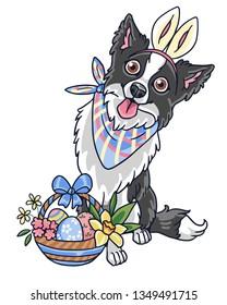 Easter border collie dog