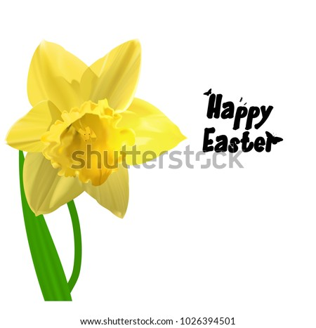 Easter illustration Yellow vector Narcissus