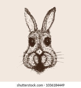 Easter rabbit. Sketch  hand drawn illustration