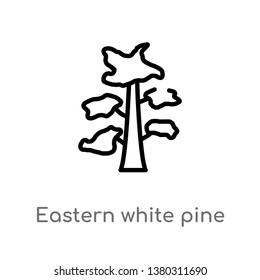 eastern white pine tree vector line icon. Simple element illustration. eastern white pine tree outline icon from nature concept. Can be used for web and mobile