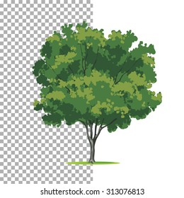 Eastern-redbud tree. Isolated vector tree on white background.