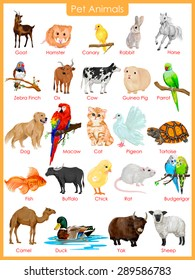 easy to edit vector illustration of chart of pet animals