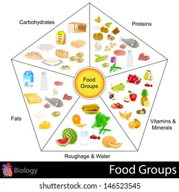 easy to edit vector illustration of food group chart