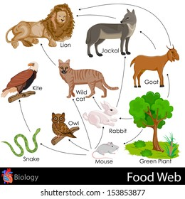 easy to edit vector illustration of food web