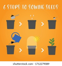 Easy steps to growing seeds