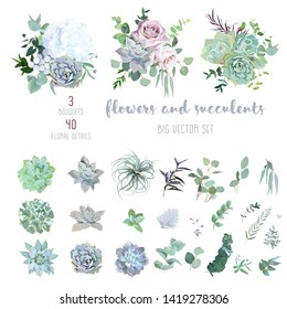 Echeveria, tillandsia blue, grey, mint succulents, white hydrangea, pale pink rose,greenery and eucalyptus big vector design set.Trendy pastel dusty color wedding collection. Isolated and editable