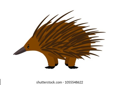 Echidna. Cute vector echidna character isolated on white background