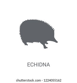 Echidna icon. Trendy Echidna logo concept on white background from animals collection. Suitable for use on web apps, mobile apps and print media.