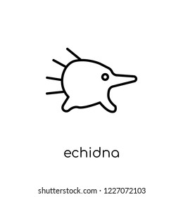 Echidna icon. Trendy modern flat linear vector Echidna icon on white background from thin line animals collection, editable outline stroke vector illustration