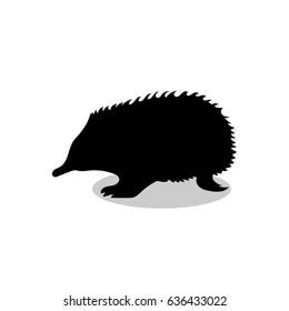 Echidna mammal black silhouette animal