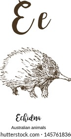 Echidna, A to z, alphabet sketch australian animals drawing vector illustration. Vintage hand drawn with lettering. Ready for print. Letter E for Echidna. ABC.