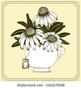 Echinacea tea. Hand drawn vector bouquet of echinacea flowers in tea cup with tea bag. Isolated on beige background