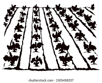 Eco early lush ripe soy bush flora culture sow on tillage furrow mulch patch isolated on white background. Line black ink hand drawn vegan scene sketch in retro doodle cartoon style and space for text