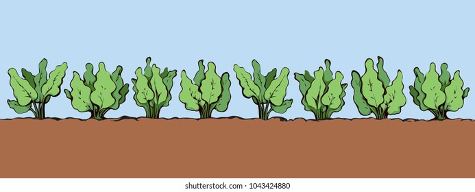 Eco fresh healthy green raw turnip bush sapling culture sow product patch on blue sky background. Bright color hand drawn spring rural herb seed yield scene in retro cartoon style with space for text