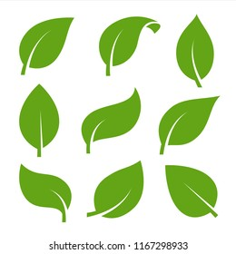 Eco green color leaf vector logo flat icon set. Isolated leaves shapes on white background. Bio plant and tree floral forest concept design.