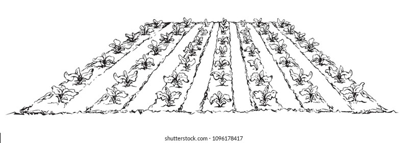 Eco green early lush ripe soy bush flora culture sow on tillage furrow mulch patch isolated on white background. Line ink hand drawn vegan scene sketch in retro doodle cartoon style and space for text