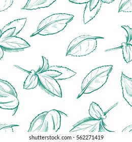 Eco peppermint tea, fresh mint leaves, menthol seamless vector background with outline organic mint leaf