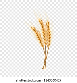 Eco wheat icon. Realistic illustration of eco wheat vector icon for on transparent background
