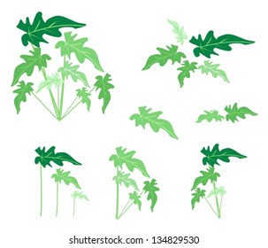 Ecological Concept, An Illustration Collection of Various Style of Green Leaves of Philodendrum Plant Isolated on White Background