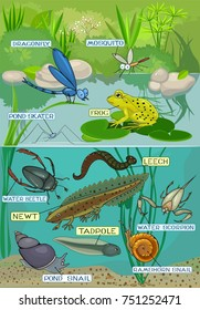 Ecosystem of pond. Different pond inhabitants with titles