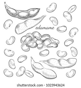 Edamame beans and pods isolated on white background. Edamame hand drawn sketch in vector.