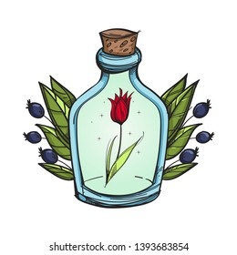 Edelweiss in a bottle on a white background. Cartoon style.
