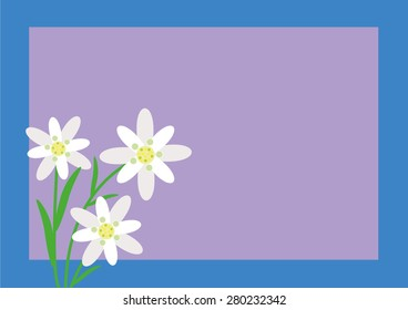 Edelweiss flower alps vector