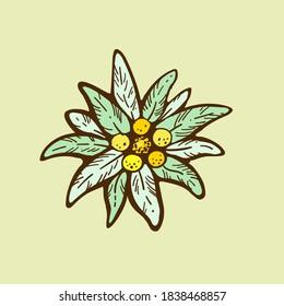 edelweiss flower icon vector alpine icon flat web sign symbol logo label set