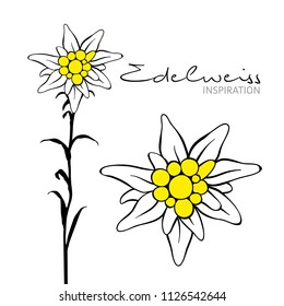 Edelweiss flower inspiration