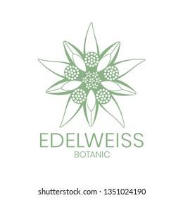 Edelweiss. Edelweiss flower logo on white background