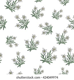 Edelweiss flower seamless pattern. Vector illustration