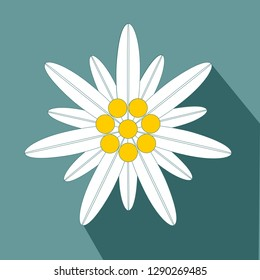 Edelweiss Flower Symbol Alpinism flat design icon Vector eps 10