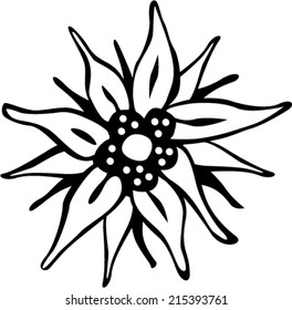 Edelweiss flower, the symbol of alpinism - vector