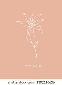 Edelweiss flower. Symbol. Element for design