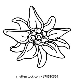 Edelweiss flower vector illustration on white background. Doodle style. Design icon, print, logo, poster, symbol, decor, textile, paper, card.