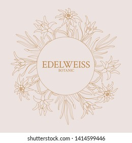 Edelweiss. Frame with edelweiss flowers on a pink background