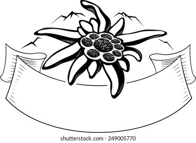 Edelweiss (leontopodium) flower, the symbol of alpinism, with banner and mountain. Vector tattoo illustration. Logo.