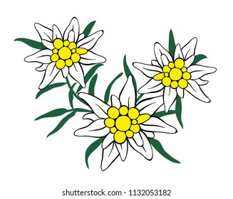 Edelweiss three flower