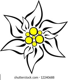Edelweiss - vector.