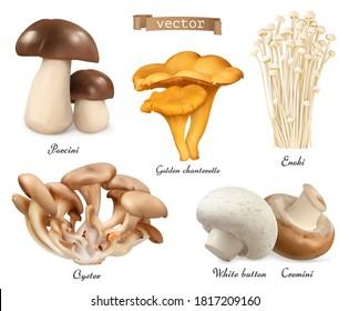 Edible mushrooms. Porcini, golden chanterelle, enoki, oyster mushrooms, cremini, white button. 3d vector realistic objects set. Food illustration