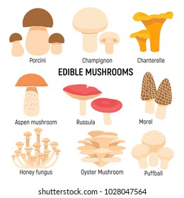 Edible mushrooms set. Champignon, chanterelle, porcini,morel vector illustration isolated